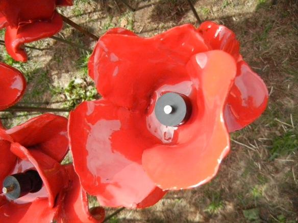 20140831 poppy planting 028