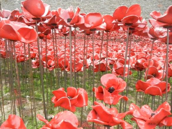 20140831 poppy planting 033