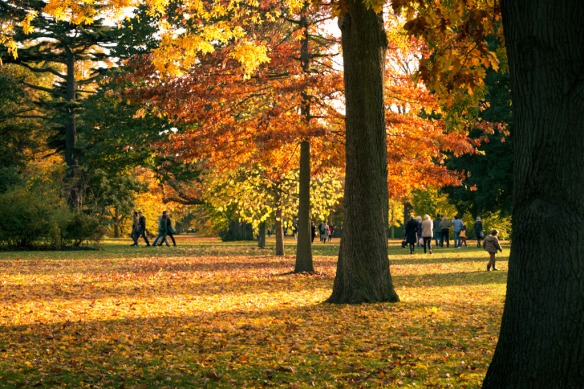 Kew Gardens, Autumn in London