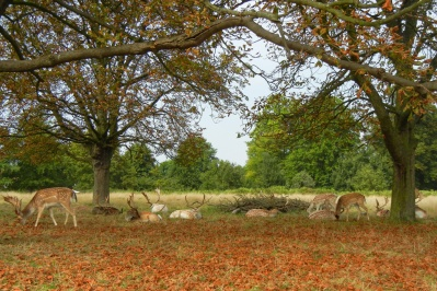 20140907_richmond_park_autumn_0367