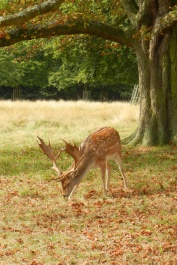20140907_richmond_park_autumn_0371