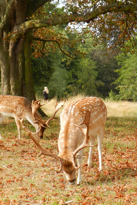 20140907_richmond_park_autumn_0374
